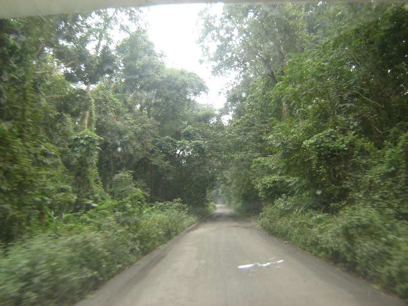 Chilapata Forest