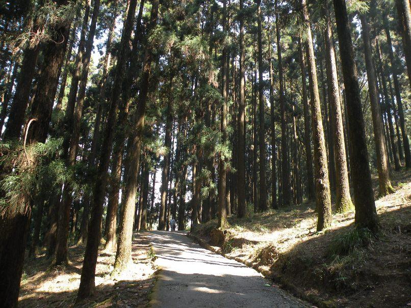 dow-hill-kurseong