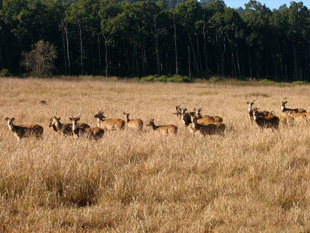 Jim Corbett National Park