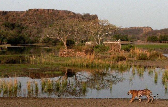 Ranthambhore Tiger park