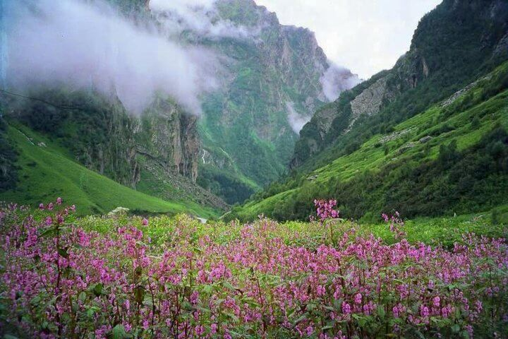 Trek-to-Valley-Of-Flowers