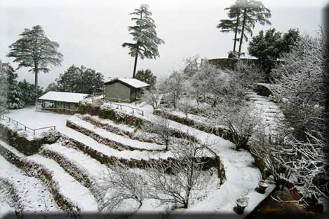 Binsar Retreat