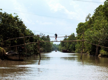 Monkey Bridges