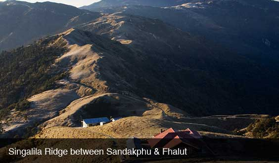 singalila-ridge-between-sandakphu-phalut-trek
