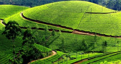 5 Best Tea Plantation Holiday destinations in India