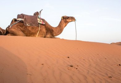 How To Plan A Desert Tour In Morocco